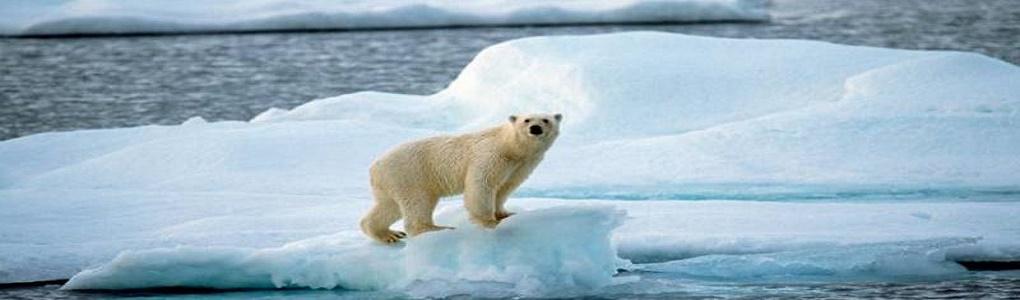 Ο πλανήτης μας, η ζωή μας αλλά και η ζωή η ίδια, αξίζουν περισσότερο από τα κέρδη τους!